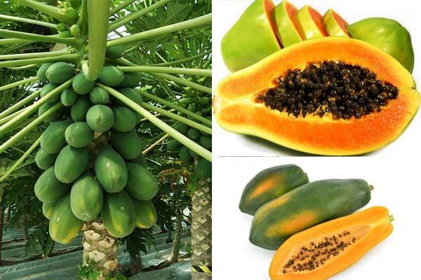 Maschere viso alla papaia