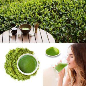 perdere peso con il tè matcha